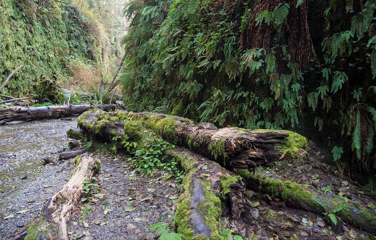 Fern Canyon, Humboldt County, California
