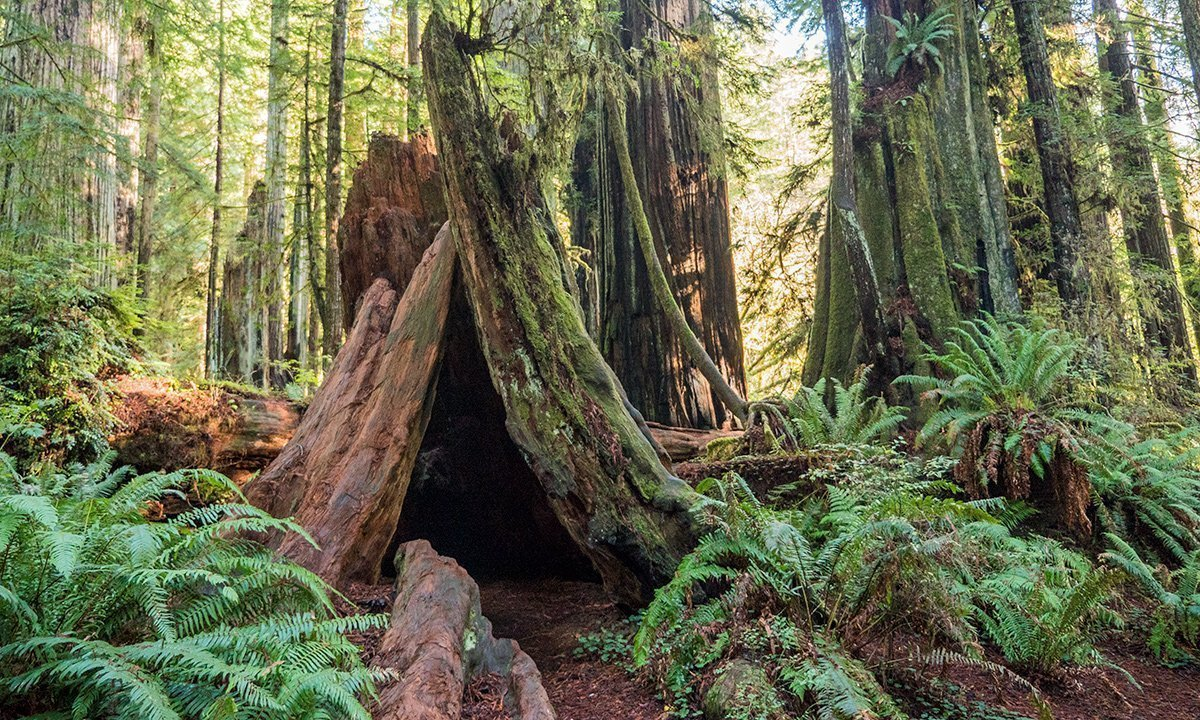 Founder's Grove, Humboldt County, CA
