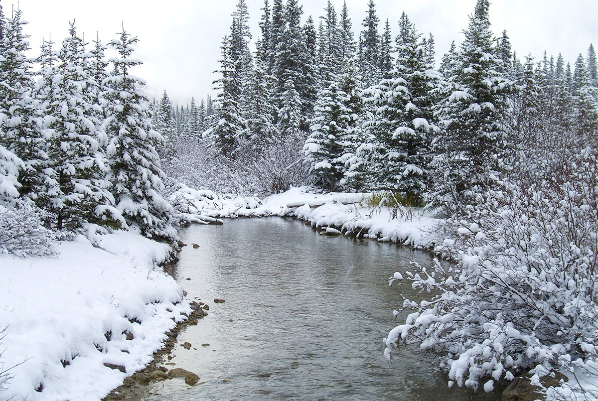 Banff-Lake Louise: The Rockies in Rutting Season (Video)