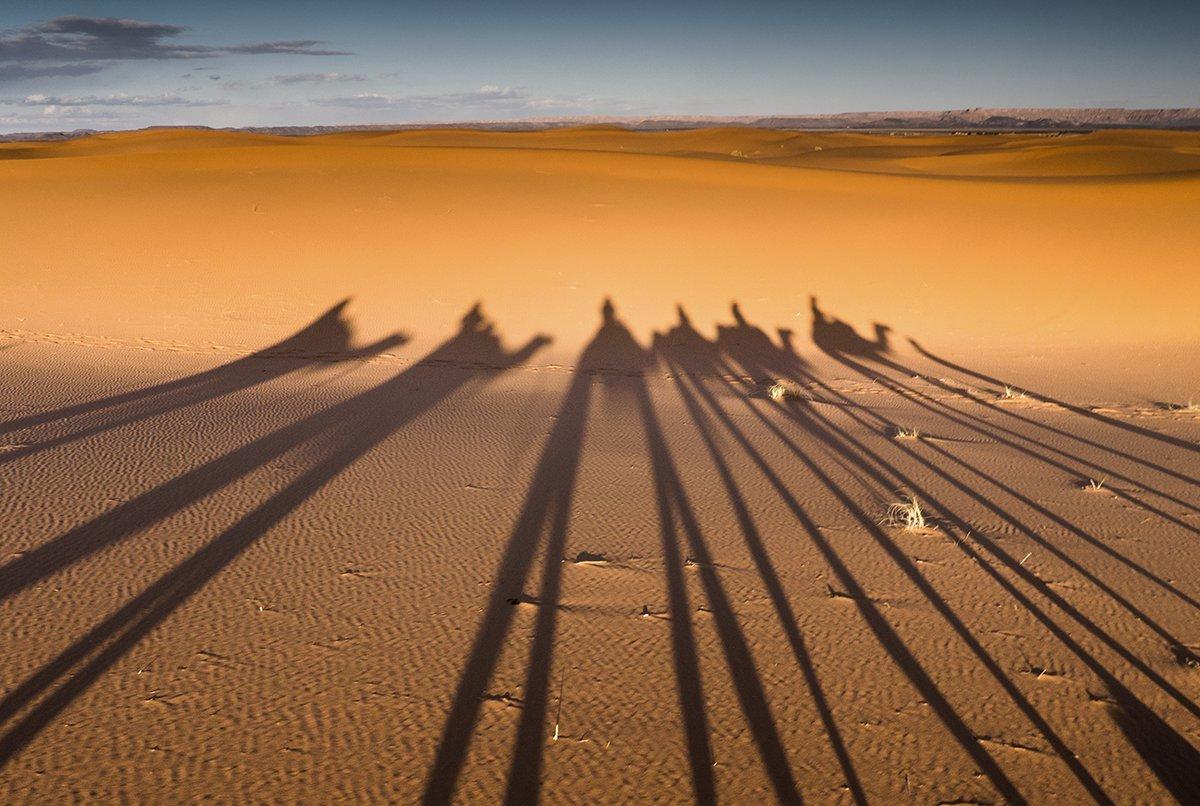 Camel Legs Shadow, Morocco