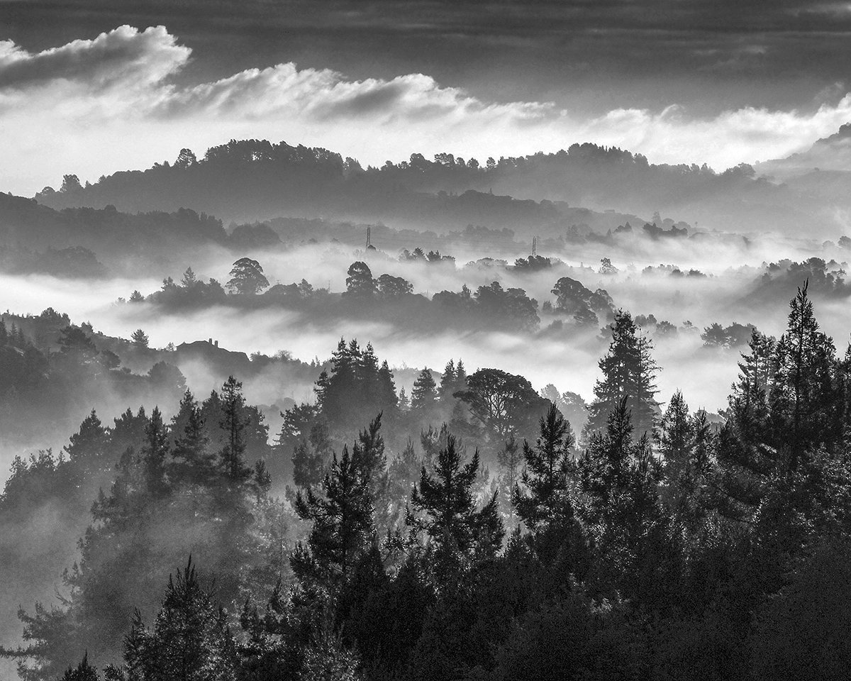 Foggy Morning, Marin County, CA Photo: Russell Johnson
