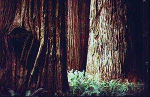 stoutgrove