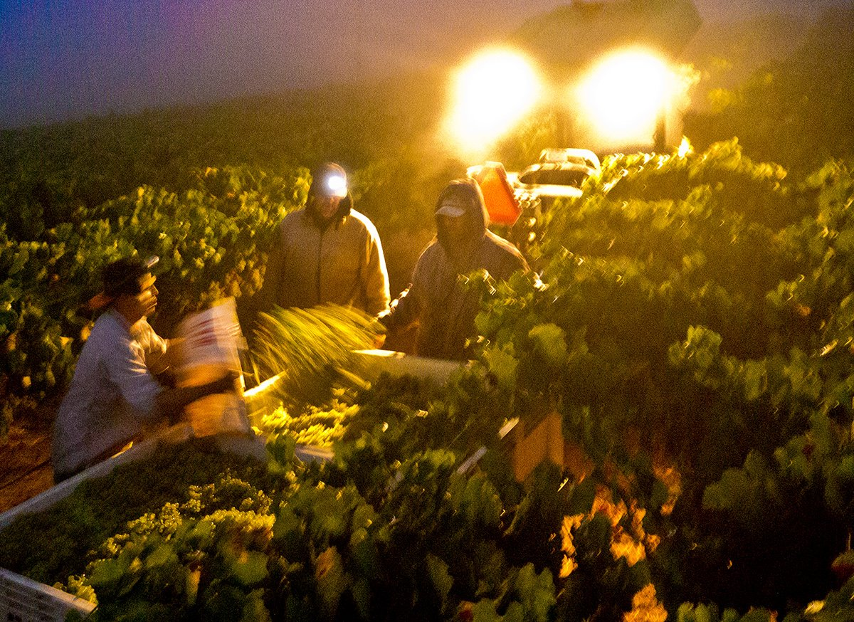 Night Harvest, Sonoma