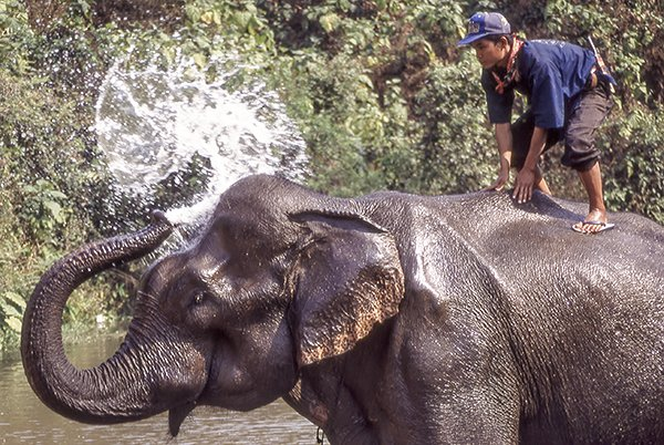 Eloephant Bath Time - Thailand