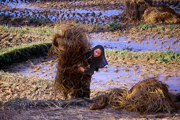 Woman with Grain, Chitwan