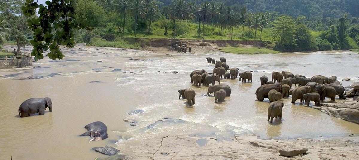 Arthur C. Clarke's Sri Lanka