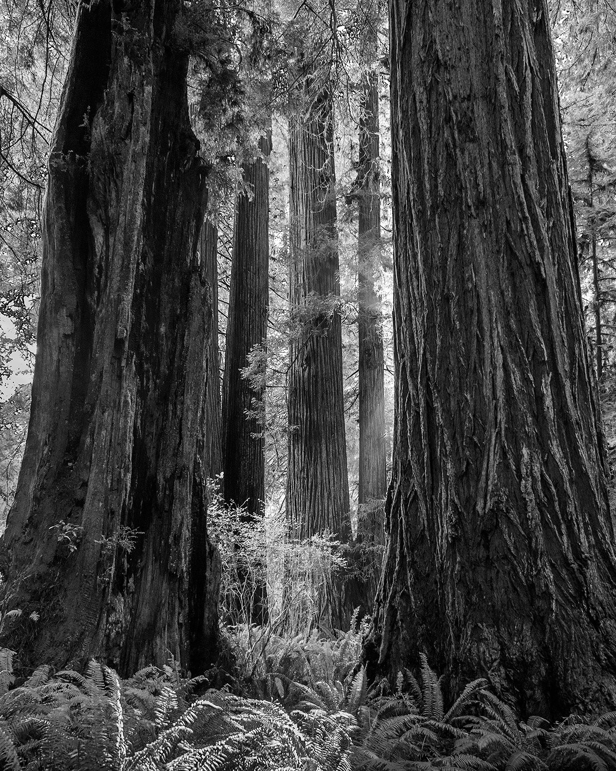 Stalking Ansel Adams