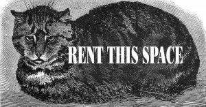 Rent this Space Cat