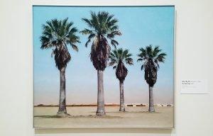 Robert Bechtle - Four Palm Trees 1969