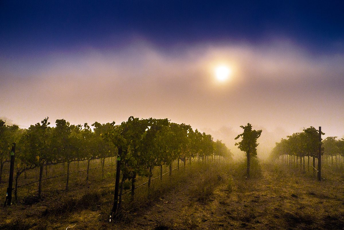 Red Eye Grape Harvest: Photo Gallery