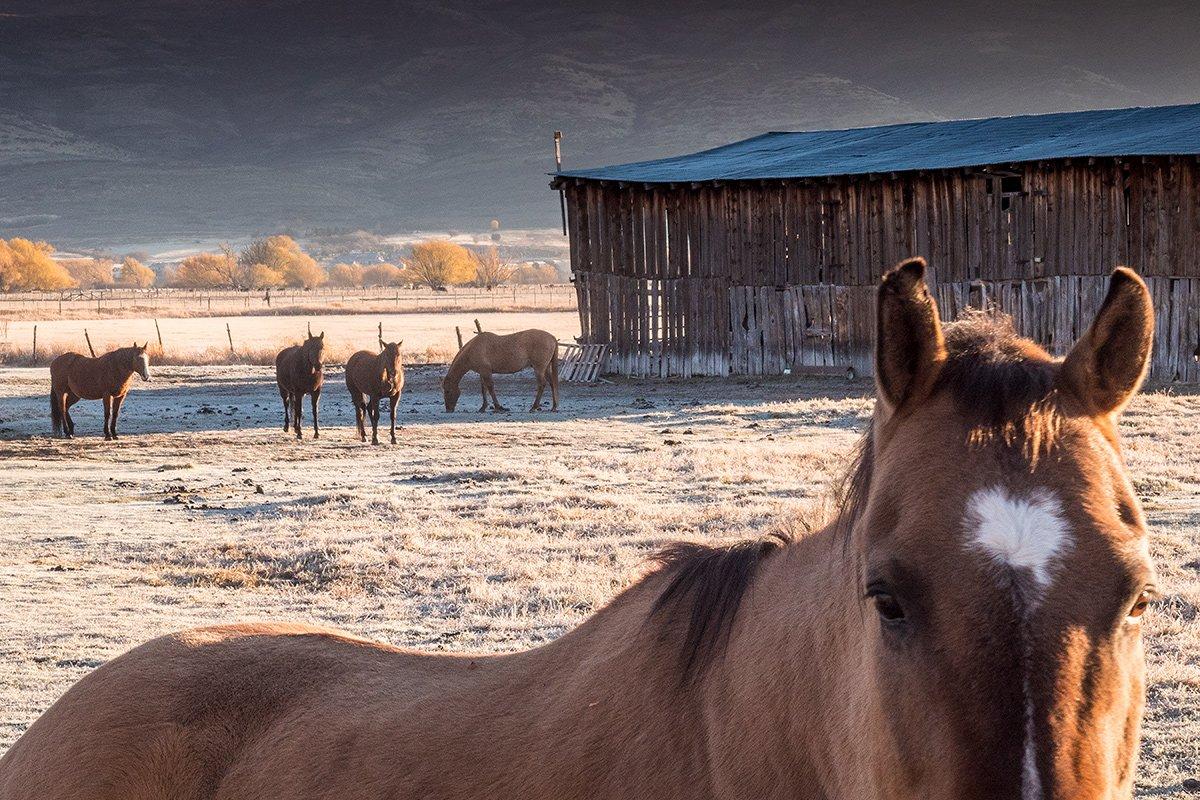 Horses, Wasatch, Utah