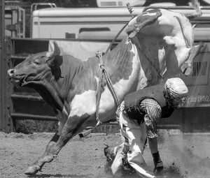 Bucking Bull in Flight