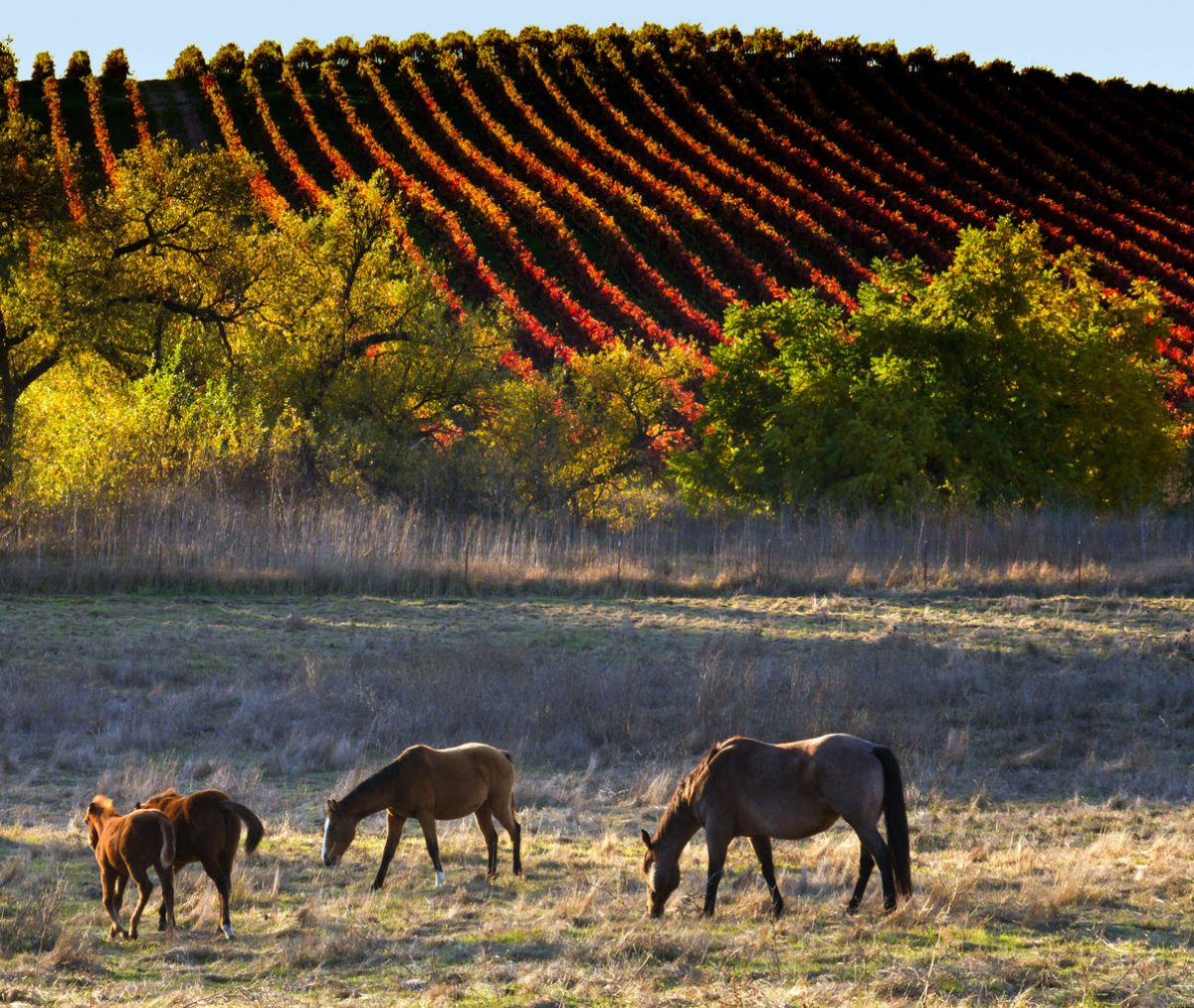 Photography: Fall Fashions in Wine Country