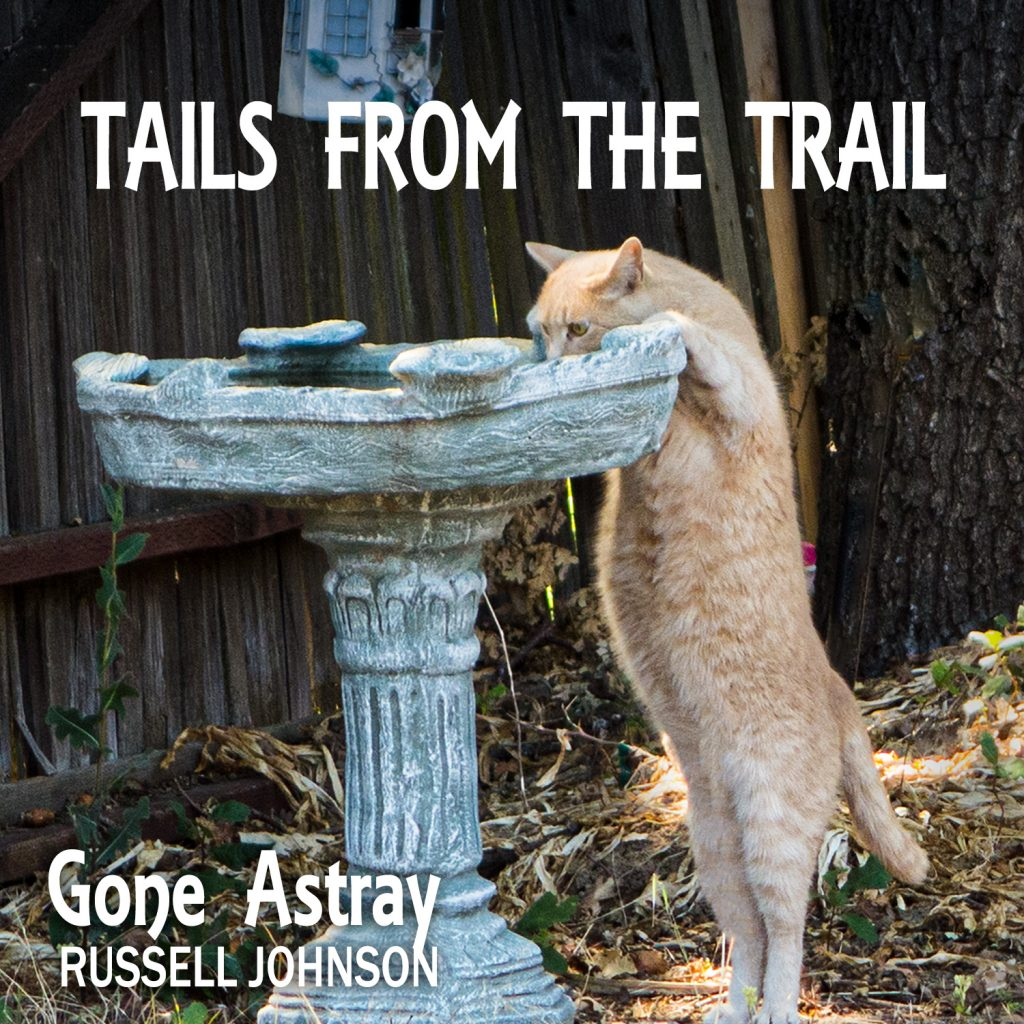 Tails from the Trail - Gone Astray. Interviews with dogs I meet on my morning walk.
