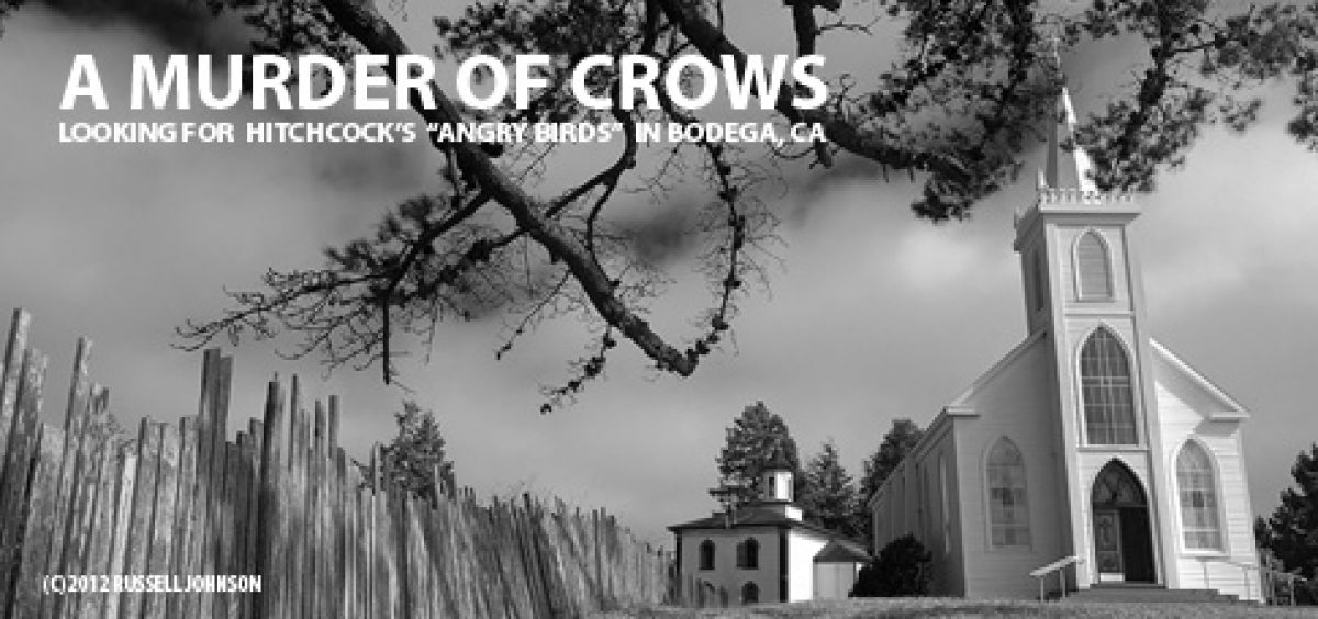 "Looking for ""Angry Birds"" in Bodega, California"