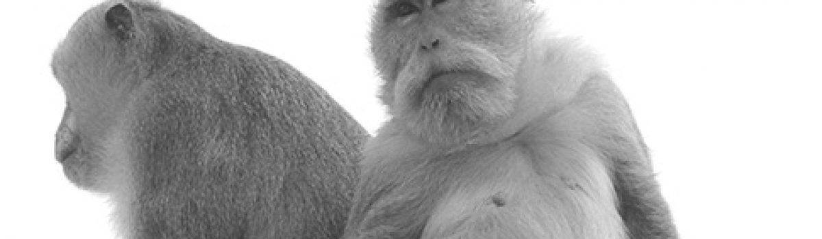 Dancing With the Apes: Kecak Dance, Bali