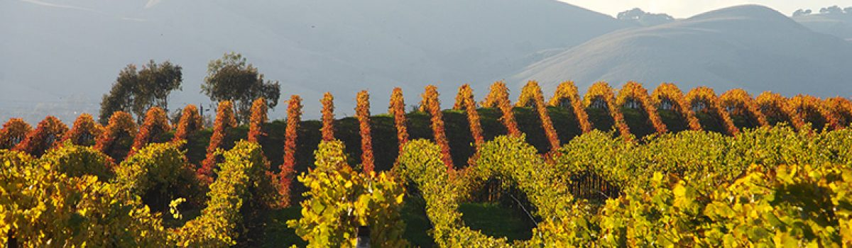 Photo Gallery: Autumn in the Vineyards, Sonoma