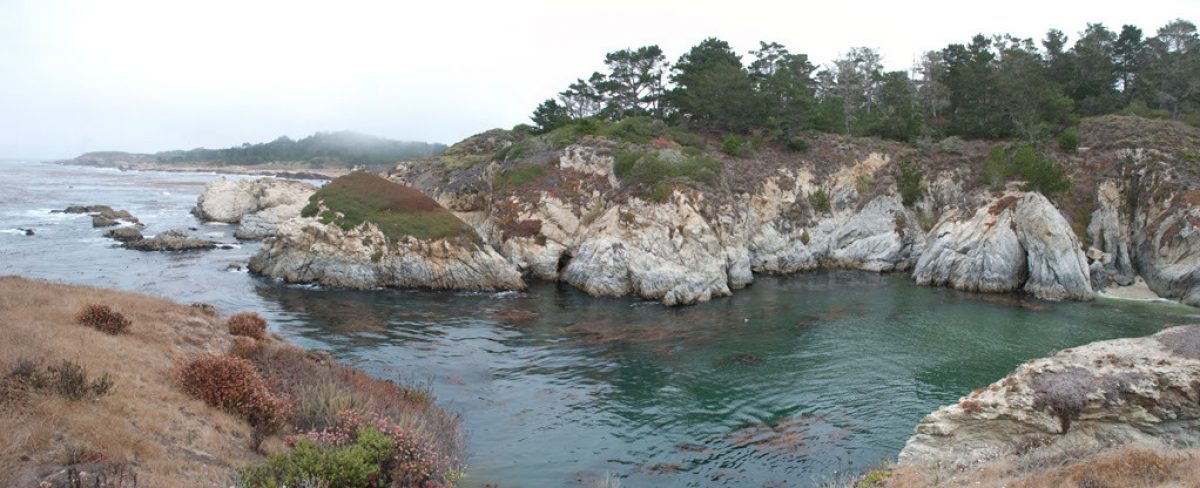 Up From Baja: Point Lobos Migrates North